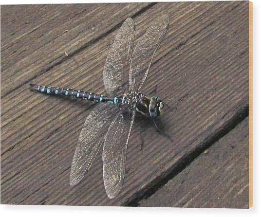 Pacific Forktail Wood Print