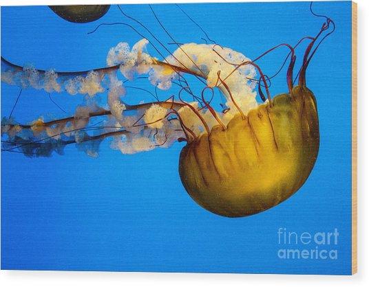 Pacific Nettle Jellyfish Wood Print