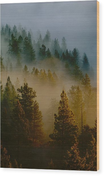 Pacific Northwest Morning Mist Wood Print