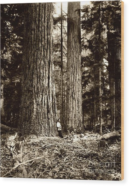 Pacific Old Growth Forest Wood Print