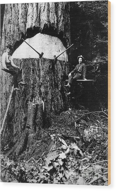 Pacific Old Growth Tree And Fallers Wood Print