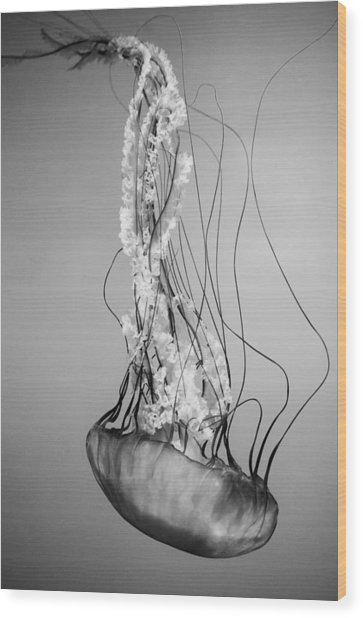 Pacific Sea Nettle - Black And White Wood Print