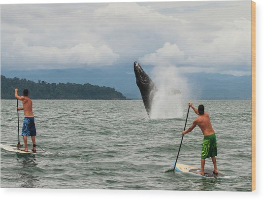 Paddle Boarders And Humpback Whale Wood Print