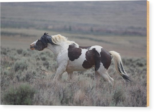 Paint Mustang Stallion Wood Print