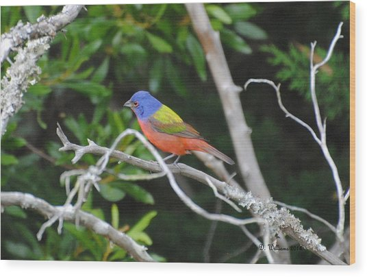Painted Bunting Out On A Limb Wood Print