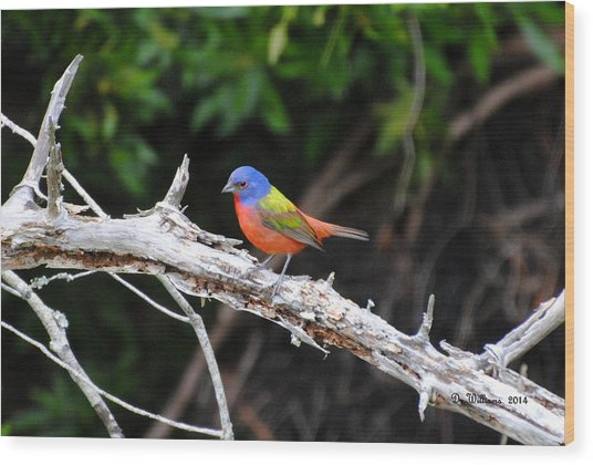 Painted Bunting Perched On Limb Wood Print