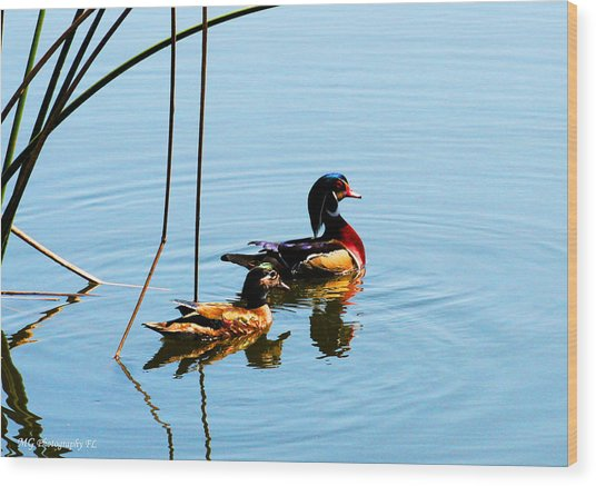 Wood Print featuring the photograph Painted Ducks by Marty Gayler