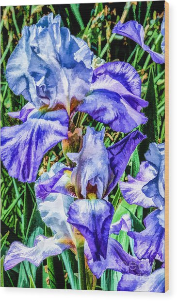 Painted Iris Wood Print