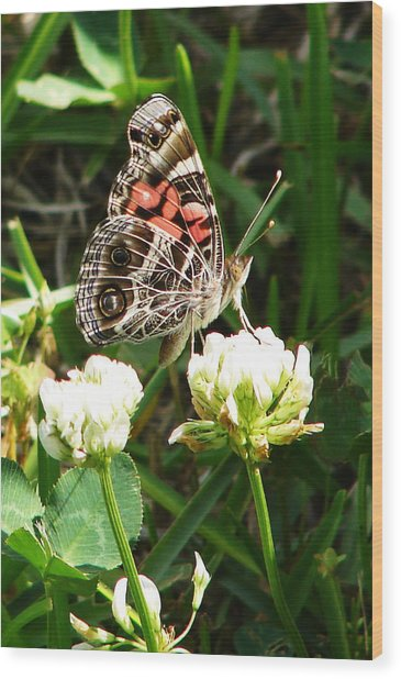 Painted Lady Butterfly 					 Wood Print by Ella Char