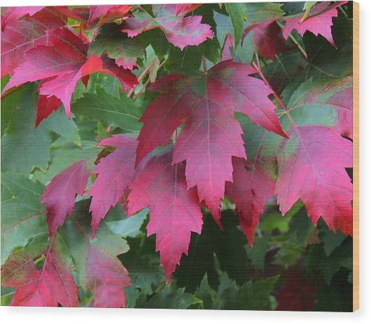 Painted Leaves Wood Print