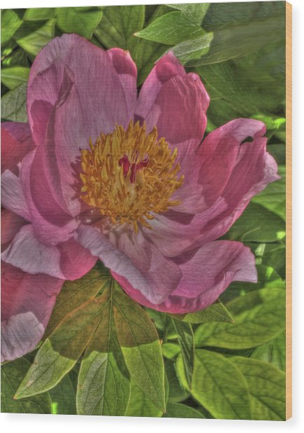 Painterly Peony Wood Print