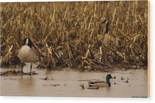 Pair Of Canada Geese And Teal Duck Wood Print by Rosemarie E Seppala