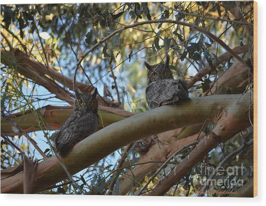 Pair Of Great Horned Owls Wood Print