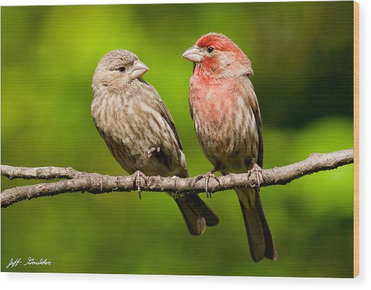 Pair Of House Finches In A Tree Wood Print