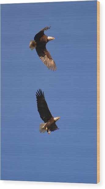 Pairs In Flight And Life Wood Print