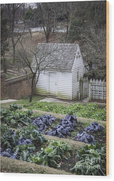 Palace Kitchen Winter Garden Wood Print