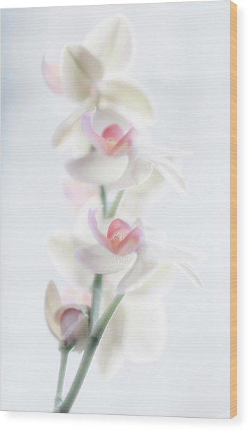 Pale Beauty Wood Print