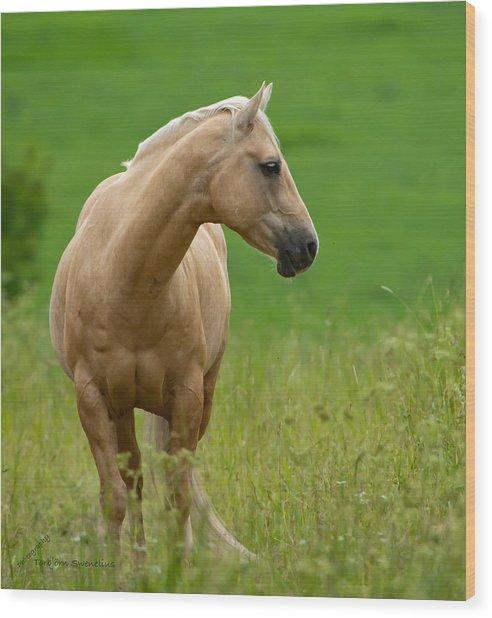 Pale Brown Horse Wood Print