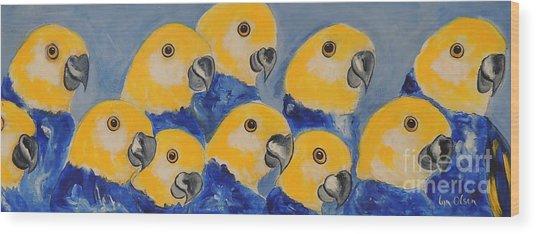 Pale Head Parrots Wood Print