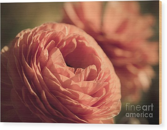 Pale Pink Petals Wood Print