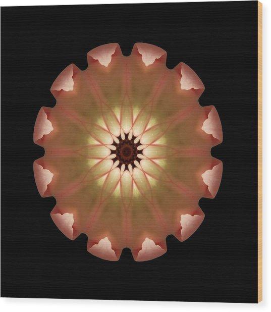 Pale Pink Tulip Flower Mandala Wood Print