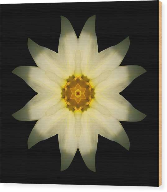Pale Yellow Daffodil Flower Mandala Wood Print