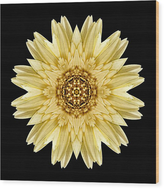 Pale Yellow Gerbera Daisy I Flower Mandala Wood Print