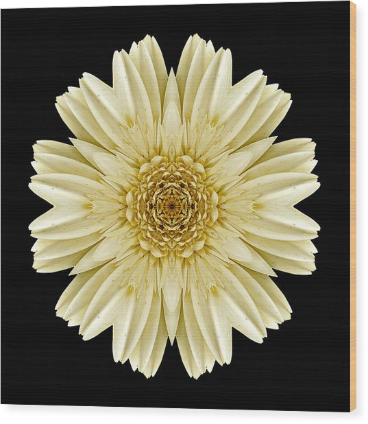 Pale Yellow Gerbera Daisy IIi Flower Mandala Wood Print