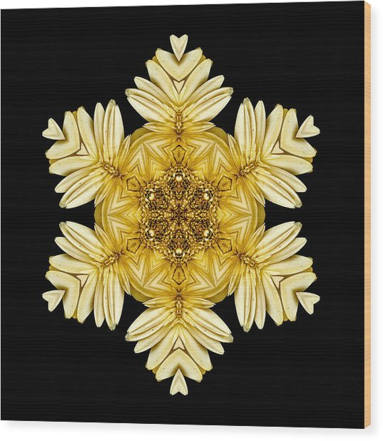 Pale Yellow Gerbera Daisy Vii Flower Mandalaflower Mandala Wood Print
