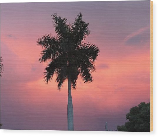 Palm Against Salmon Pink Wood Print by Beth Williams
