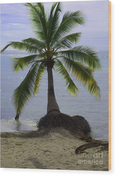 Palm At The Edge Of The Sea Number Two Wood Print