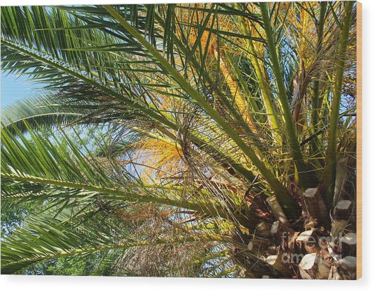 Palm Canopy Wood Print