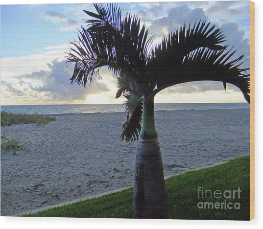 Palm In The Morning Wood Print
