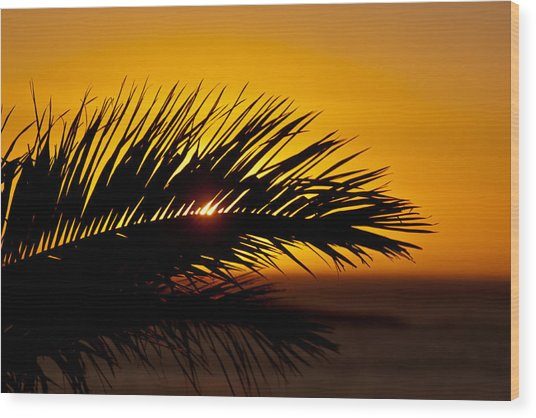 Palm Leaf In Sunset Wood Print