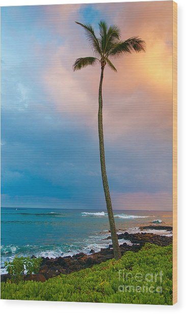 Palm Tree At Sunset. Wood Print