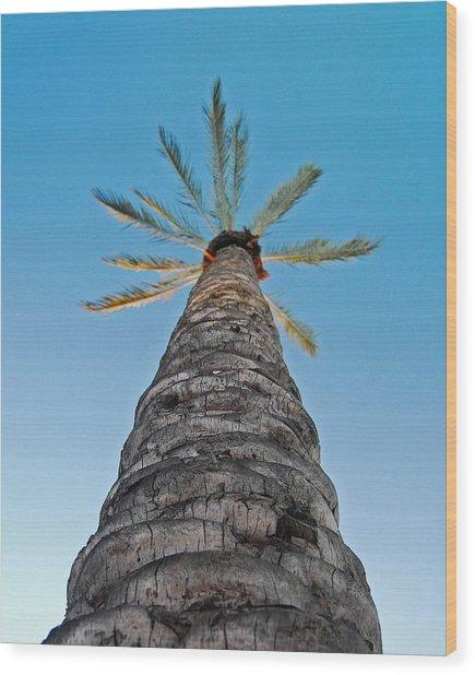 Palm Tree Looking Up Wood Print