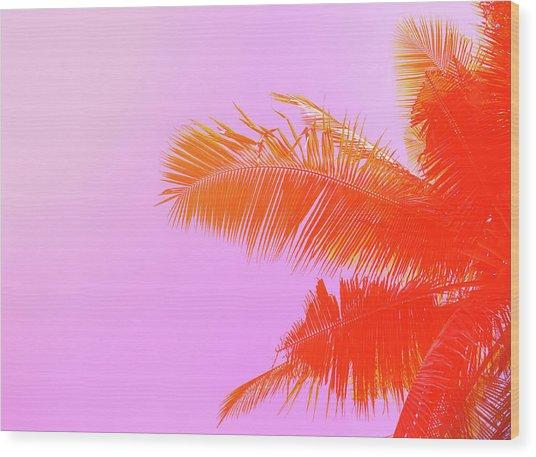 Palm Tree On Sky Background. Palm Leaf Wood Print by Slavadubrovin