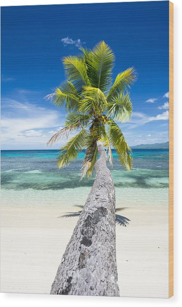 Palm Tree Over Water Wood Print