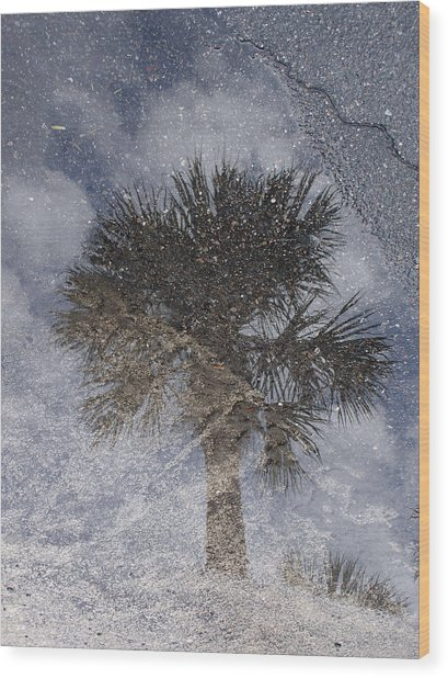 Palm Tree Reflection Wood Print by Michel Mata