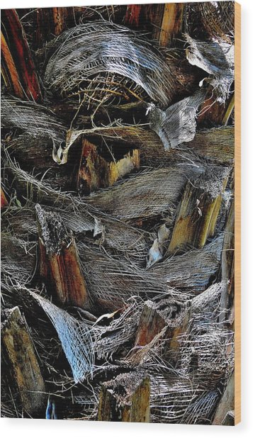Palm Tree Trunk - Darwin - Australia Wood Print