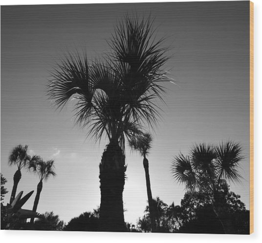 Palm Trees Reach For The Sky Wood Print