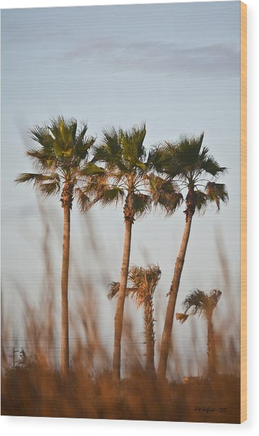 Palm Trees Through Tall Grass Wood Print