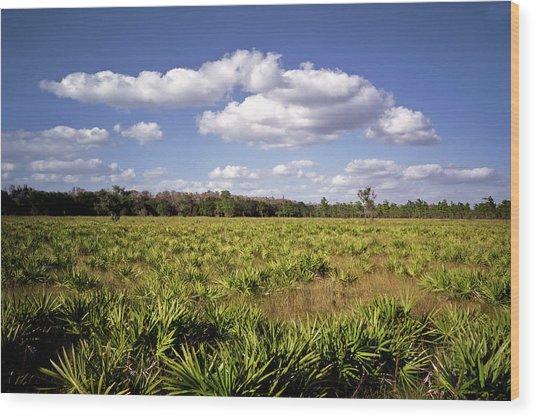 Palmetto Field. Three Lakes W.m.a. Wood Print