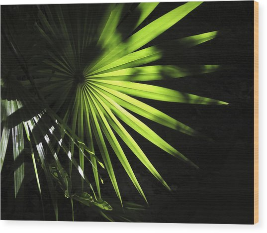 Palmetto And Rays Wood Print