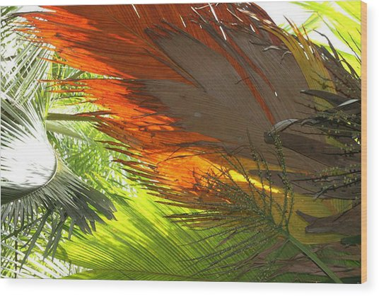Wood Print featuring the photograph Palms by Debbie Cundy