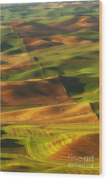Palouse Morning Wood Print