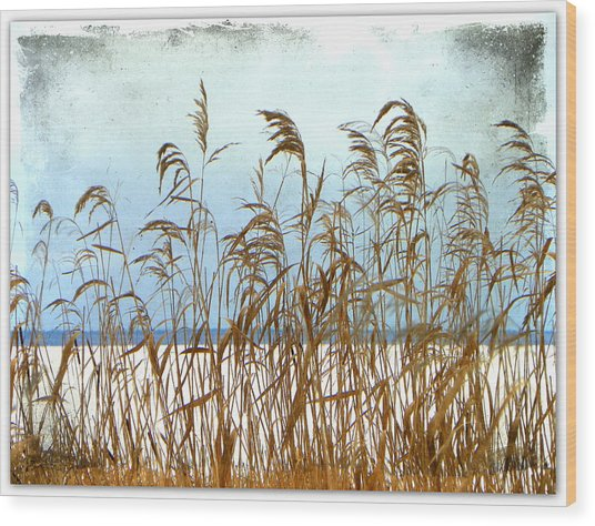 Pampas Grass Wood Print by Dianne  Lacourciere