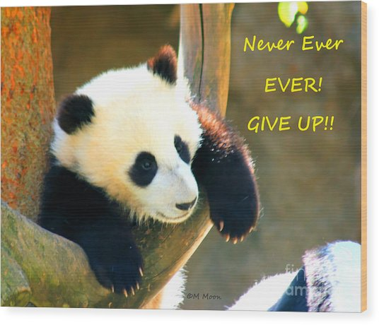 Panda Baby Bear Never Ever Ever Give Up Wood Print