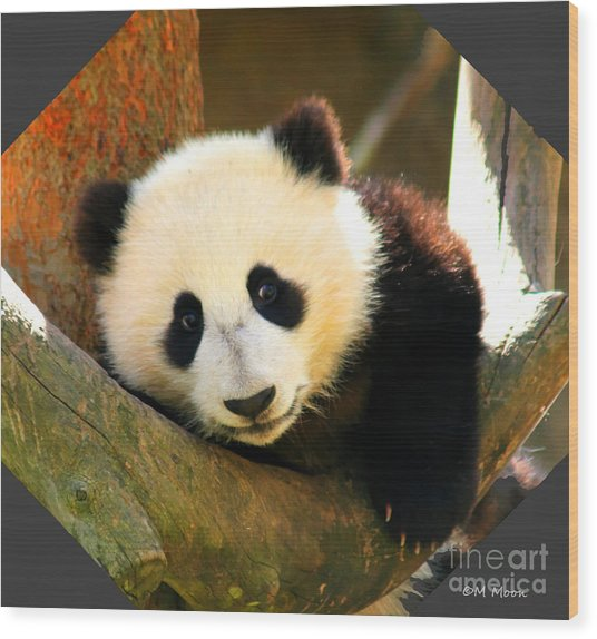 Panda Bear Baby Love Wood Print