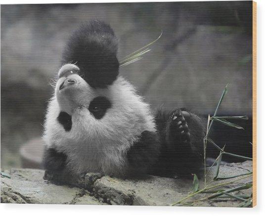 Panda Cub At National Zoo Wood Print